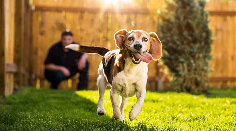Picture a Pack of Beagles | Eagle River Pet Photographs | Marilyn Jeffers Photography