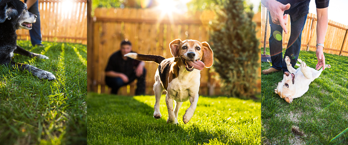 Pet_Dog_Beagle_Rescue_Photographer3