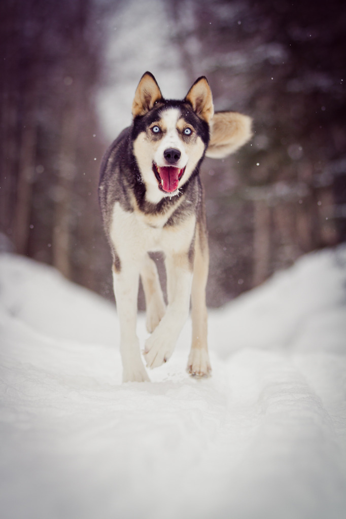Anchorage_Pet_Photographer-20