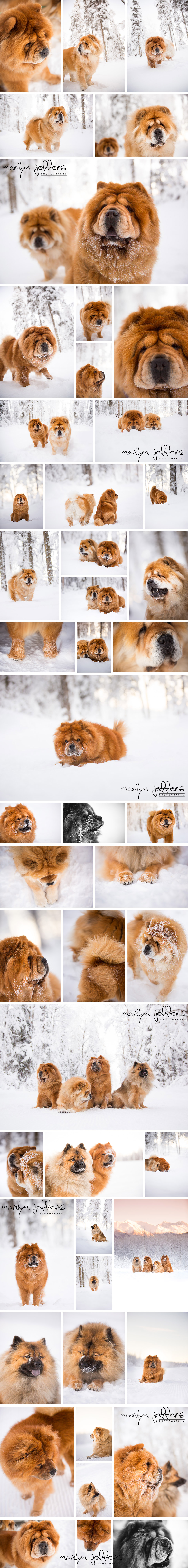Linhart_Dog_Winter_Snow_Photographer_EagleRiver1