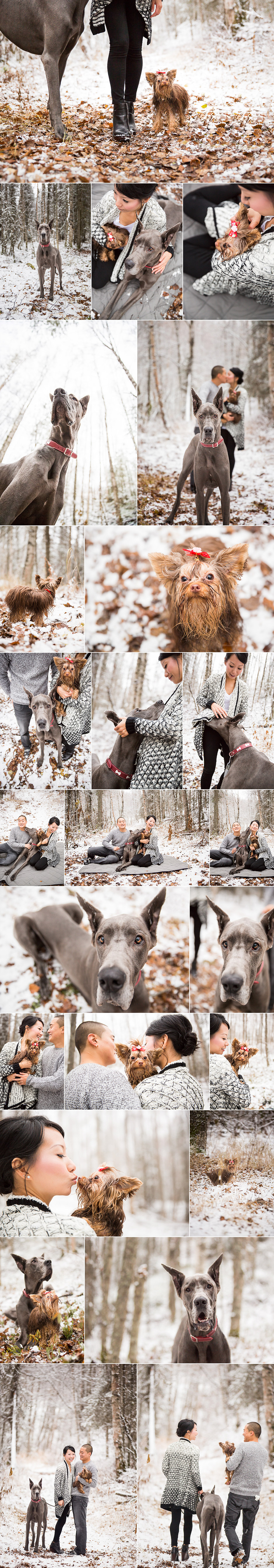 Winter dog Photography