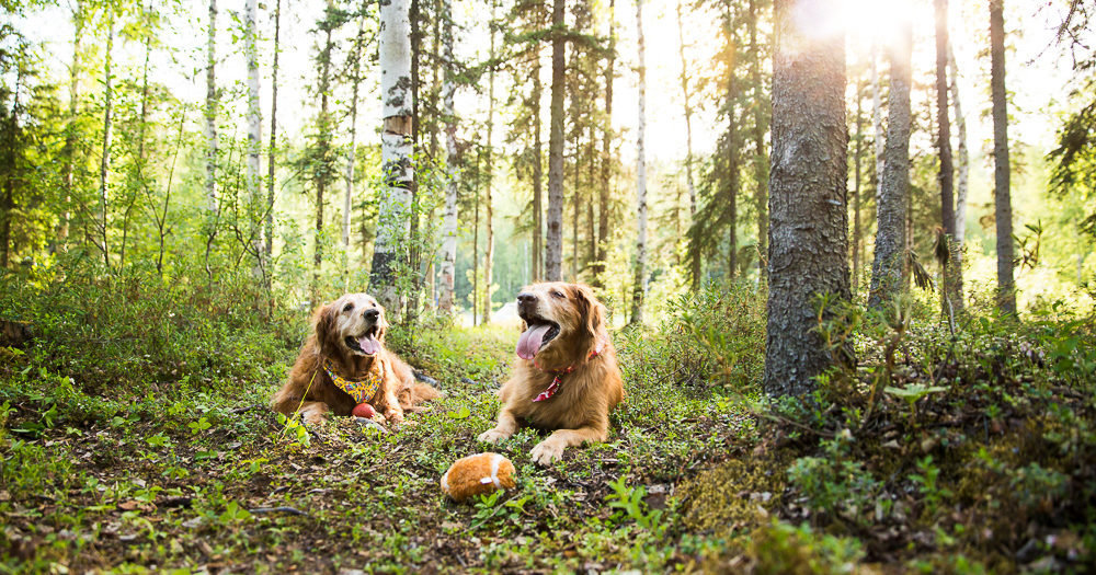 End of Life Photos | Pet Photography in Anchorage Alaska | Marilyn Jeffers Photography