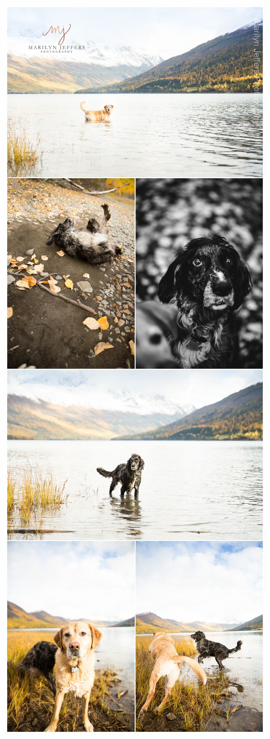 Alaska Pet Photography
